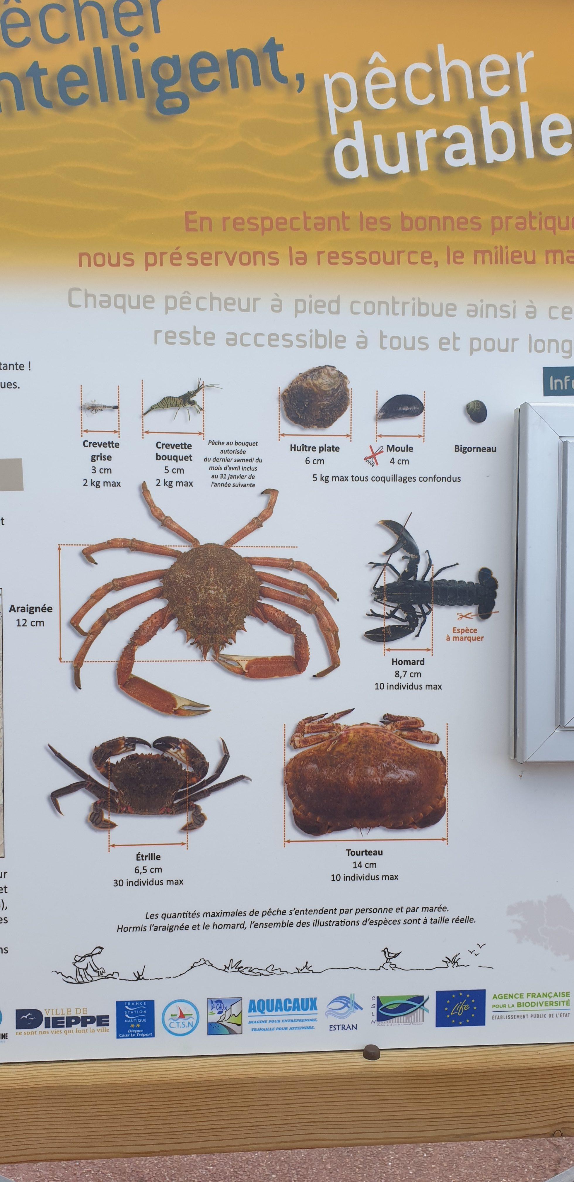 owoce morza we francji